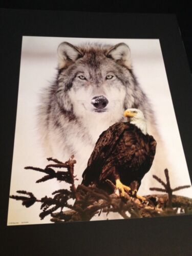 Wolf W/ Eagle Large 16 X 20&quot; Picture Print In Lithograph by Dealer<br/>Prints - 360