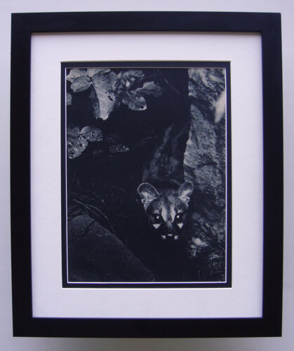 """Fascinating BRASSAI Antique 1930s Photogravure """"The Night Prowlers"""" FRAMED COA"""