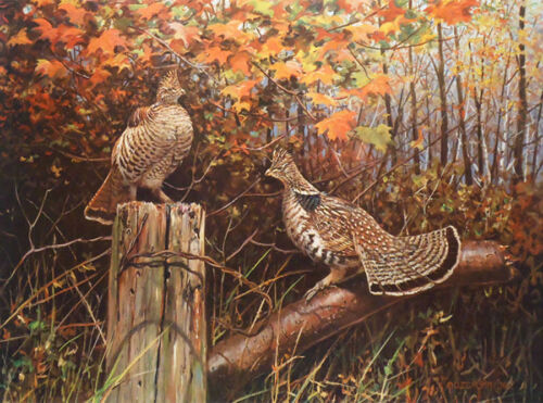 Ruffed Grouse 3 by Owen Gromme<br/>Prints - 360