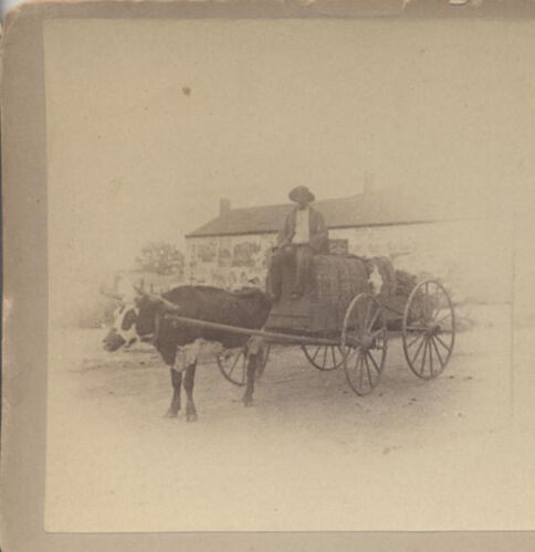 STEREOVIEW OF AFRICAN AMERICAN MAN ON CART PULLED BY BULL - SAVANNAH, GA