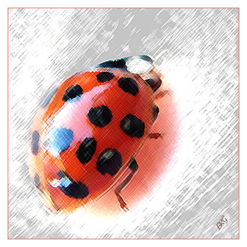 "Ladybug Spectacular 12"" x 12"" Fine Art Print, Insects, Bugs, Beetles, Nature"