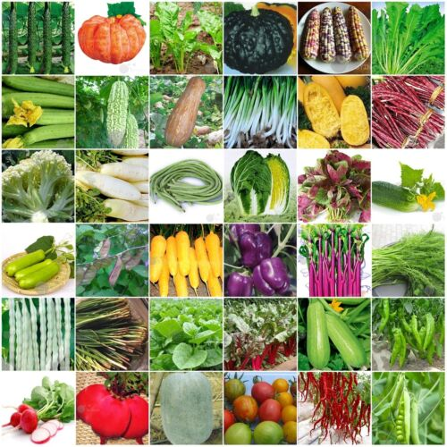 60kinds Heirloom Garden vegetable seed Non-GMO seeds bank survival organic plant