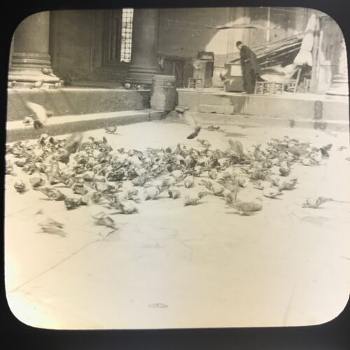 Antique Magic Lantern Glass Slide Photo Pigeons At Mosque In Constantinople