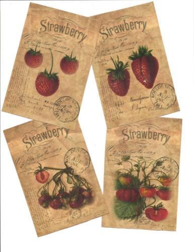 LOT OF~12 Vintage look LABELS~Grungy labels ~Strawberry labels