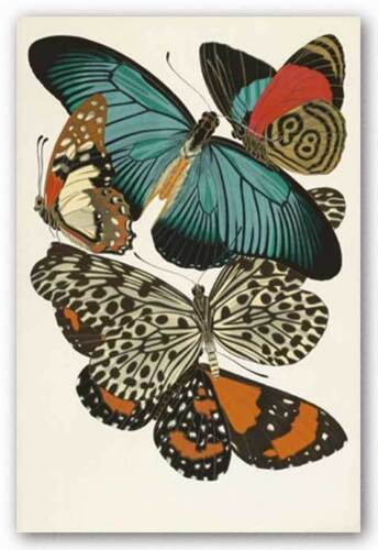 INSECT ART PRINT Collection Butterflies II Winter Works