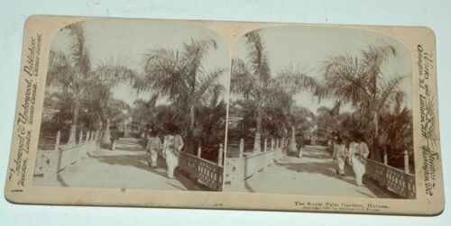 STEREO CARD BY UNDERWOOD AND UNDERWOOD--THE ROYAL PALM GARDENS-HAVANA--1898