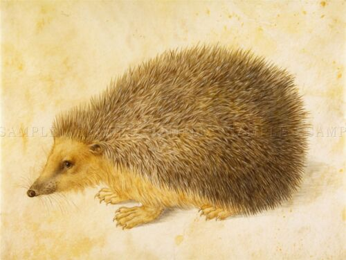 PAINTING ANTIQUE NATURE HEDGEHOG HANS HOFFMANN ART PRINT POSTER LAH502A