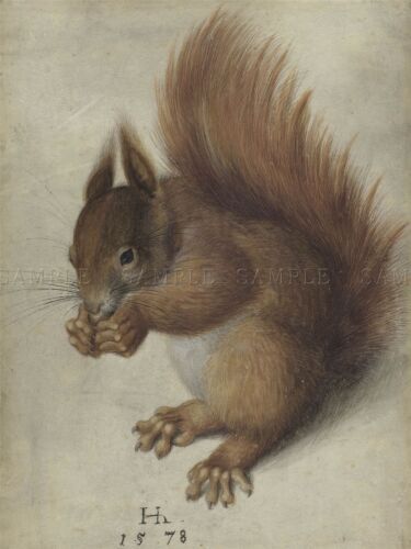 HANS HOFFMANN GERMAN RED SQUIRREL OLD ART PAINTING POSTER PRINT BB5557A