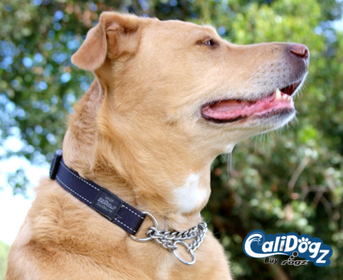 Rogz Training Dog Collar Martingale Reflective M(12-17in) L(16-22in) XL(19-27in)