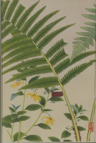 Fine Japan Japanese Botanical Ferns & Floral  Woodblock Print ca. 20th century