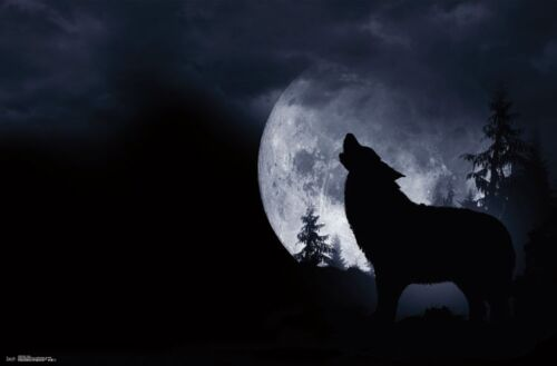 WOLF - HOWL AT THE MOON POSTER 22x34 - NATURE SCENIC 15699