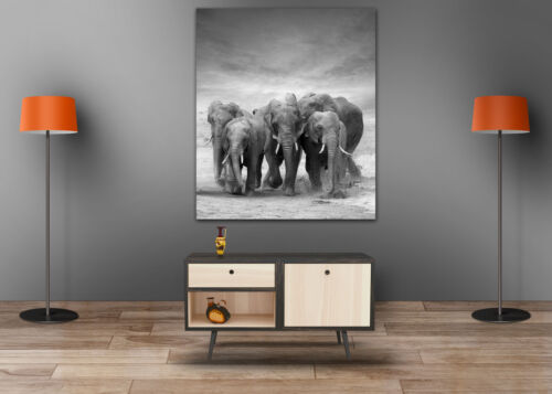 LOVING BLACK & WHITE ELEPHANTS SCENERY WALL ARTS high quality Canvas home decor