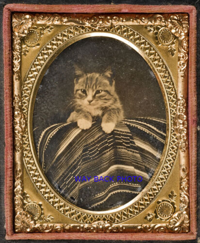 REPRINT OF 1860's  AMBROTYPE PHOTO - CAT POSED WITH MEXICAN SERAPE