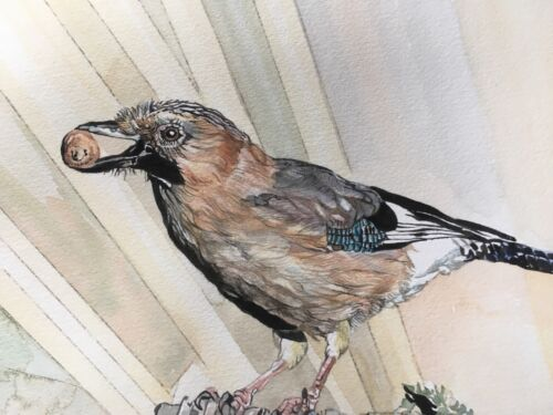 European Jay.Original Bird Watercolour Painting.Gift for Bird Watcher.Twitcher.