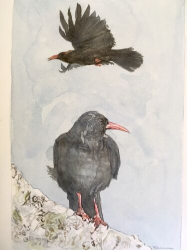 Choughs. Original Painting of Sea Birds.Perching & In Flight.Bird Watcher Gift.
