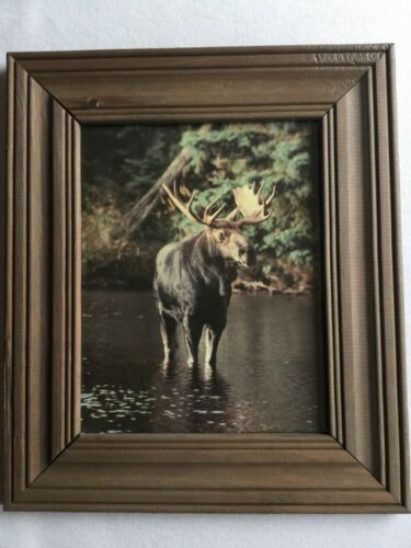 "Nice Retro Moose Print in Rustic Wooden Picture Frame - 14"" x 12"""