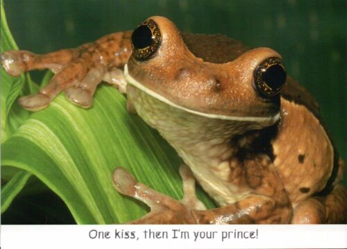 Veined Golden Eyed Treefrog, Funny Frog Kiss Prince Greeting Card - Not Postcard