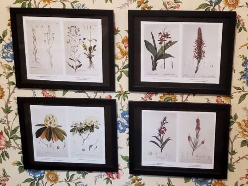 Botanical Prints  (Antique and Vintage Art Flora Plate Drawings/Paintings)