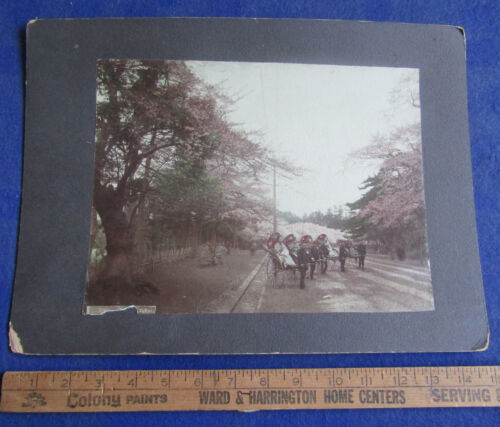 Original 1890's Oversized Tinted Photograph #2 - Cherry Blossoms, Tokyo