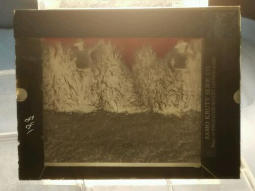 Vintage GLASS NEGATIVE SLIDE Picture of Farmer In Field With Crops