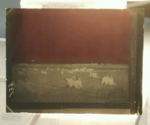Vintage GLASS NEGATIVE SLIDE Picture of Farmers In Field With Harvest