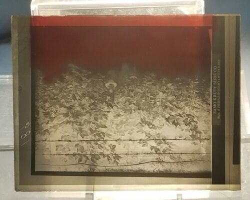 Vintage GLASS NEGATIVE SLIDE Picture of Farmer with Head High Crops in Field