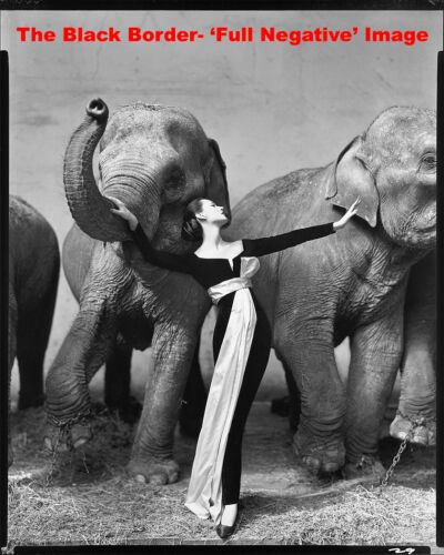"""16x20"""" DOVIMA With The Elephants -Avedon- A HQ Full Frame Replica On Photo Paper"""