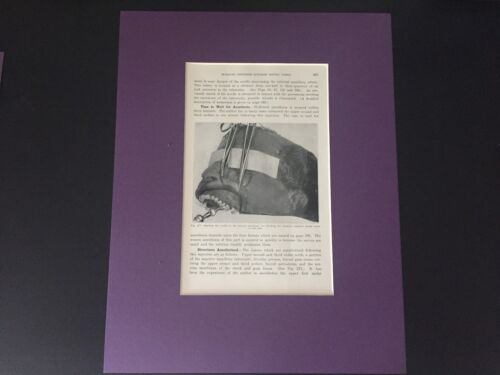 VINTAGE RARE MATTED READY TO FRAME: Medical / Dental Plate Matted for Display