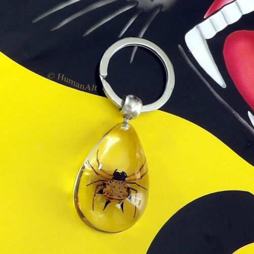 Real Insect Key Chain - Spiny Spider