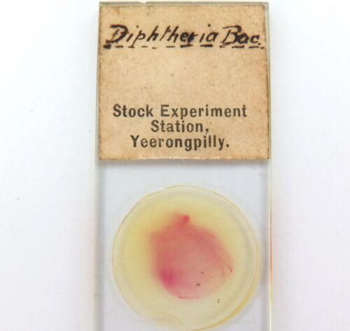 """.RARE 1890s """"DIPHTHERIA"""" SLIDE. STOCK EXPERIMENT STATION, YEERONGPILLY QLD."""
