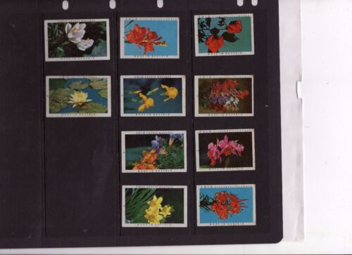 Made In Austria Array Of Vintage Matchbox Labels #3 10 Different Solo Flowers