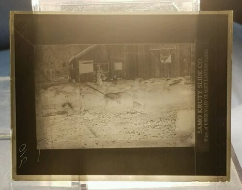 Vintage GLASS NEGATIVE SLIDE Picture of a Farmer and Child In Pig Pen (Feeding?)