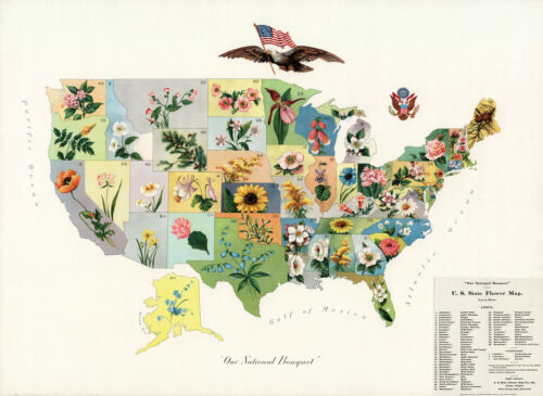 """1911 Pictorial Flower Map of the United States Wall Art Poster Print 11""""x15"""""""