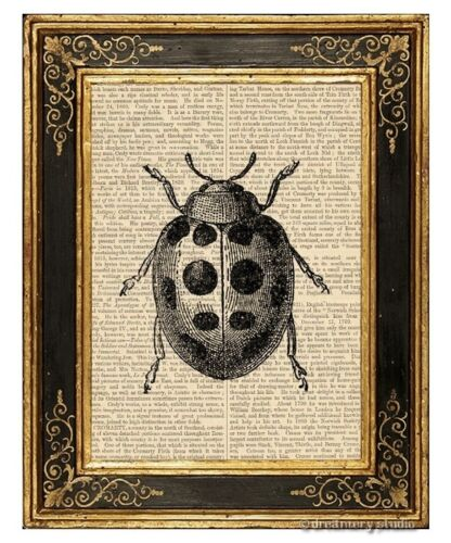 Lady Bug Art Print on Vintage Book Page Garden Insect Home Hanging Decor Gifts