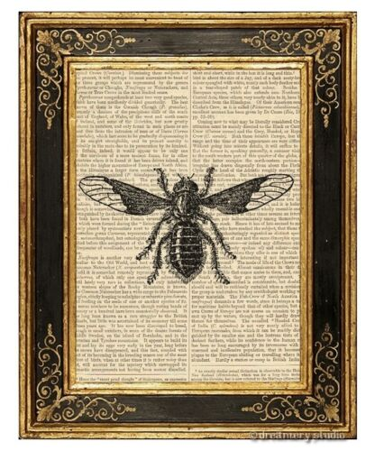 Bee Fly Art Print on Vintage Book Page Garden Farm Home Decor Wall Hanging Gifts