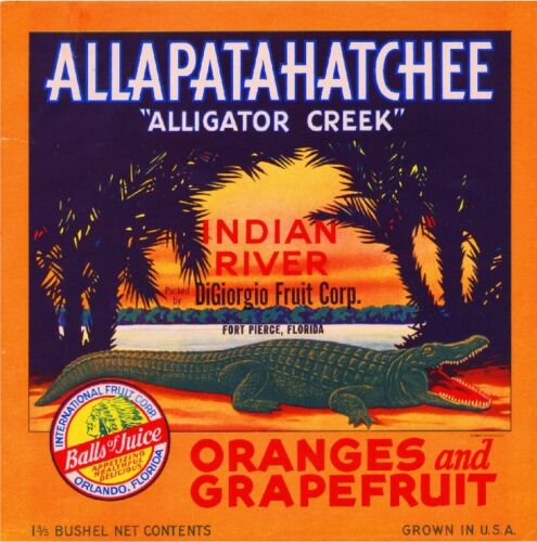 Fort Ft. Pierce Florida Allapatahatchee Alligator Orange Fruit Crate Label Print