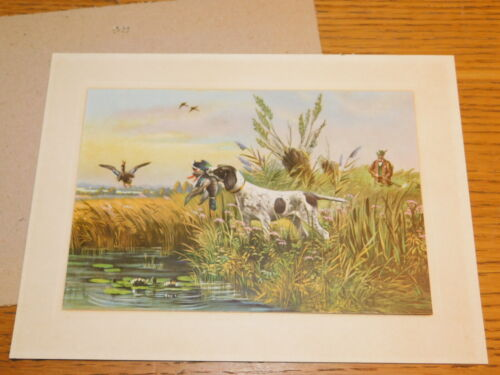 TABLEAU sous verre CPA illustrateur MULLER chasse chien canard HUNTING DOG DUCKS