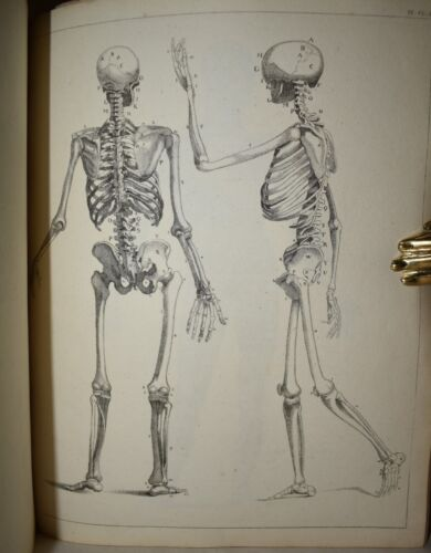 Hodson: DRAWING BOOK Cabinet of the Arts 1805 Tavole Disegno Anatomia Incisioni