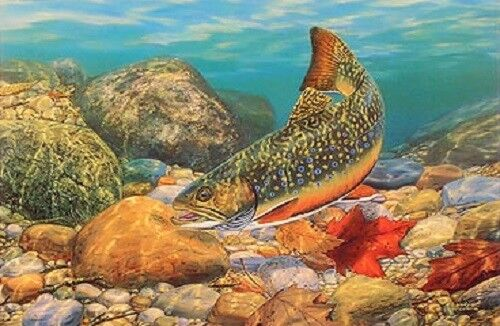Autumn Brook by Randy McGovern Fish Trout Print  12.75 x 9.25
