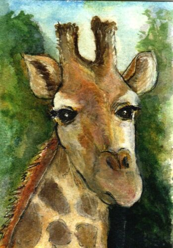 ACEO Giraffe Animal Close up Painting Watercolor Illustration Art Penny StewArt