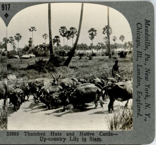 THAILAND, Thatched Huts & Cattle--#917 Keystone Stereoview Rare 1200 Card Set