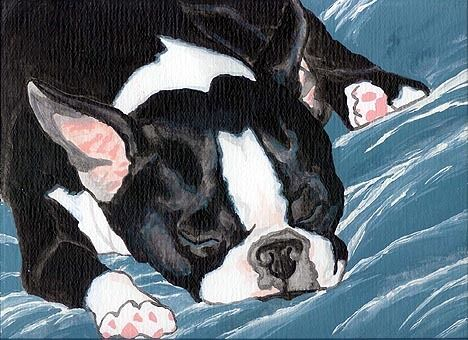 BOSTON TERRIER Sleeping Dog 8x10 Signed Art PRINT of Original Painting by VERN