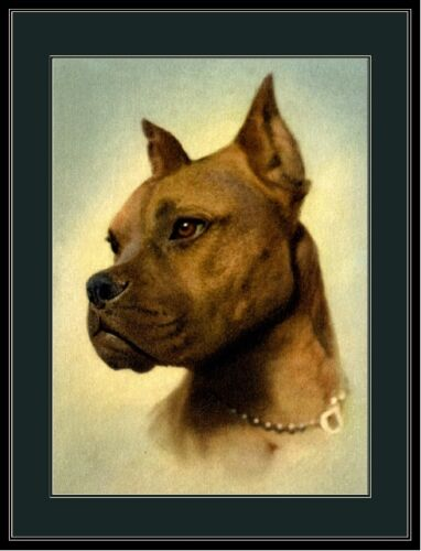 English Print Boxer Puppy Dog Head Dogs Puppies Vintage Art Poster Picture