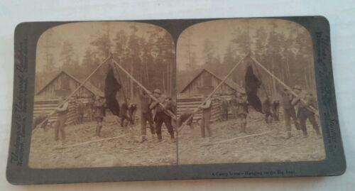 Bear Hunters Camp, Bear Hung up in Camp Stereoview Card by Underwood