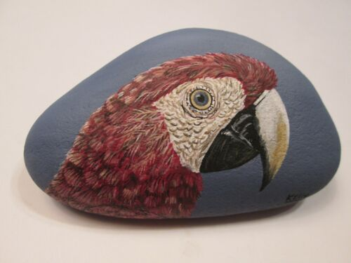 Scarlet Macaw hand painted on a rock by Ann Kelly