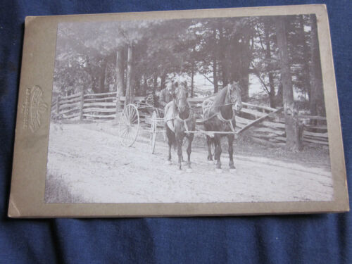 Cabinet Photo of Man Driving a Buggy with 2 Horses on Country Lane Outdoors