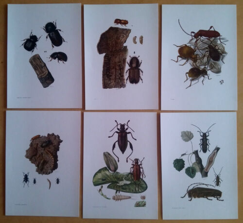 Lot planches entomologie insectes affiche 1961 vintage plates entomology insects