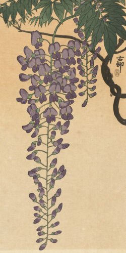 Blooming Wisteria by Unknown Japanese Woodblock