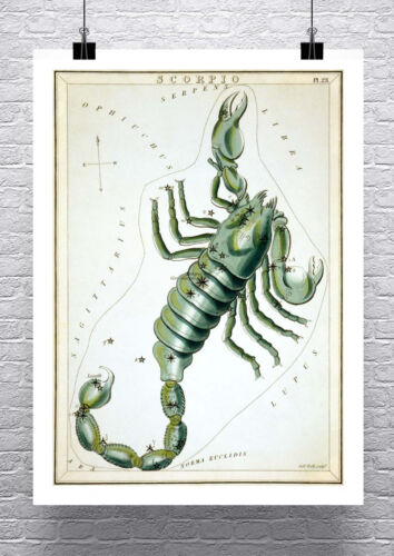 Scorpio Zodiac Sign Vintage Astronomy Rolled Canvas Giclee Print 24x32 Inches