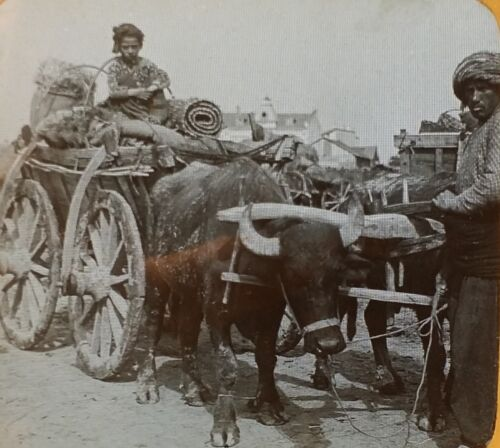 Mohammedan Farmer with Buffalo Team BULGARIA Vintage Magic Lantern Glass Slide